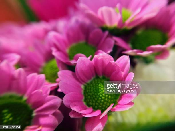 close-up of pink flowering plant in park - mark bloom stock pictures, royalty-free photos & images