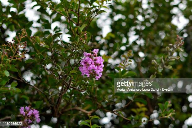 close-up of pink flowering plant - alejandro sandi stock photos and pictures