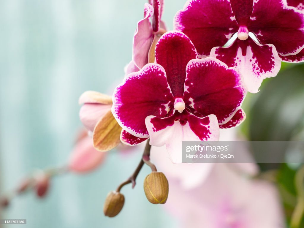 Close-Up Of Pink Flowering Plant : Stock Photo
