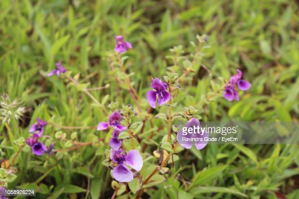 close-up of pink flowering plants on field - gode photos et images de collection