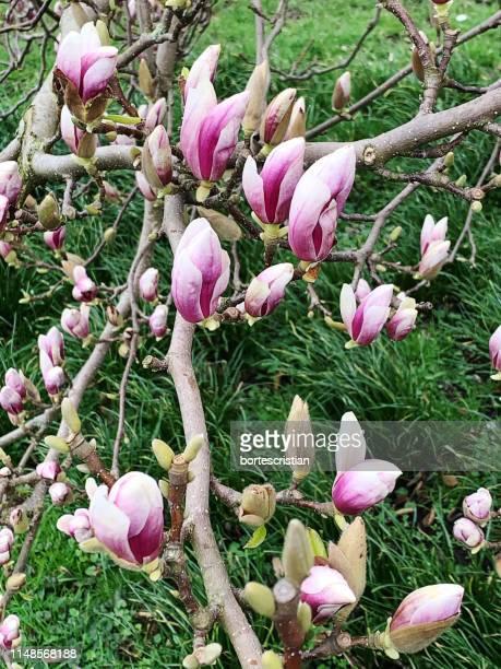 close-up of pink flowering plants on land - bortes cristian stock-fotos und bilder
