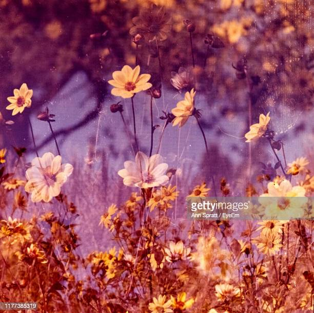 close-up of pink flowering plants on land - cross processed stock pictures, royalty-free photos & images