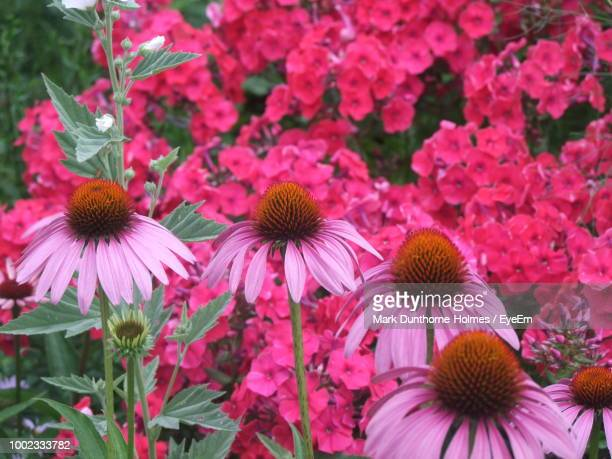 close-up of pink flowering plants - mark's stock pictures, royalty-free photos & images