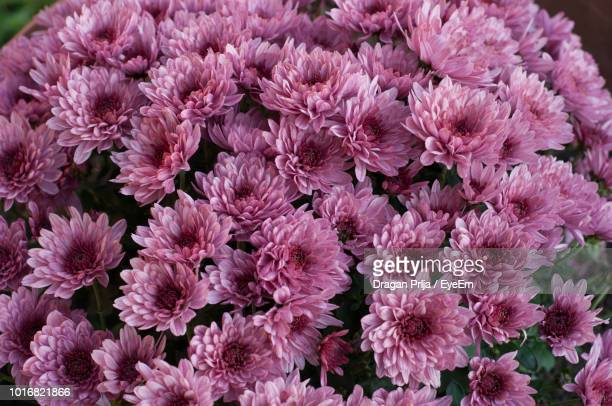 close-up of pink flowering plants - eyeem stock pictures, royalty-free photos & images