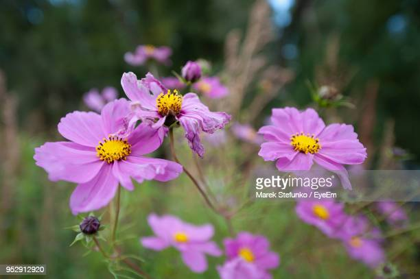 close-up of pink flowering plants - marek stefunko stock pictures, royalty-free photos & images
