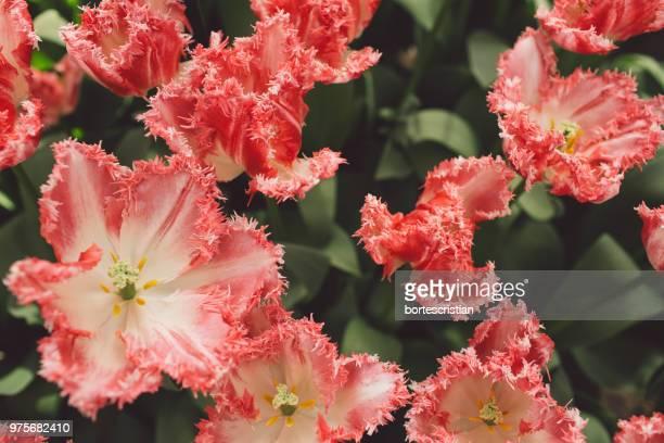 close-up of pink flowering plants - bortes photos et images de collection