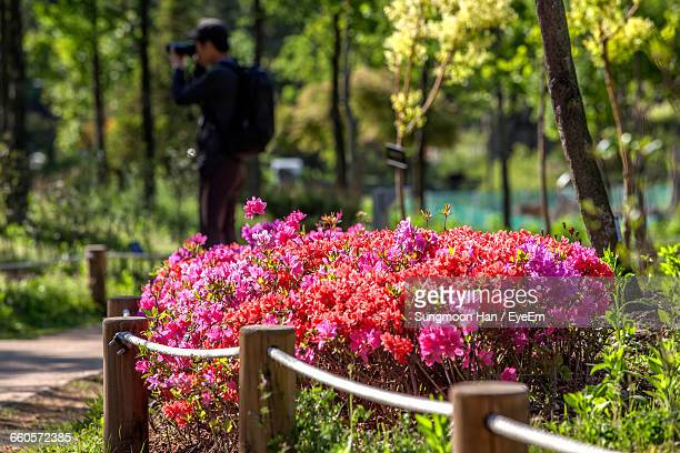 close-up of pink flowers against blurred photographer - bucheon stock pictures, royalty-free photos & images