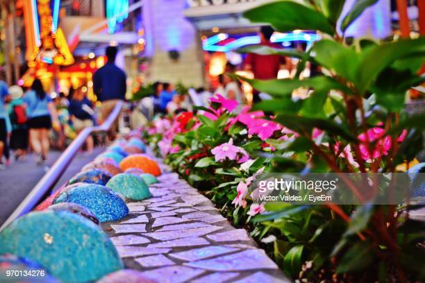 close-up of pink flowers blooming by retaining wall in city - anaheim californië stockfoto's en -beelden