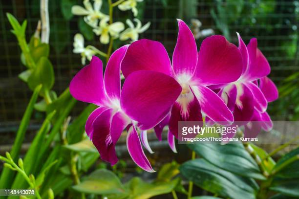 close-up of pink flowers blooming in garden - imagebook stock pictures, royalty-free photos & images
