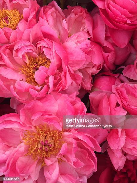 Close-Up Of Pink Flowers Blooming In Garden