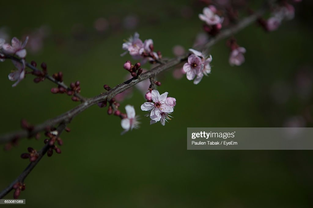 Close-Up Of Pink Flowers Blooming In Park : Stockfoto