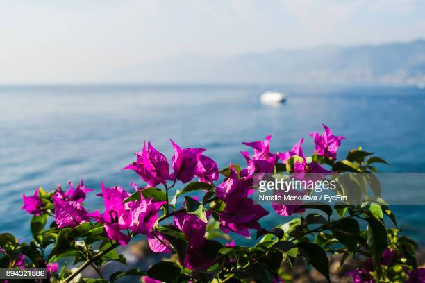 Close-Up Of Pink Flowers By Sea Against Sky
