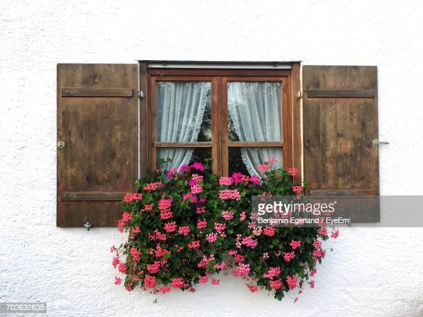 Close-Up Of Pink Flowers On Window Sill