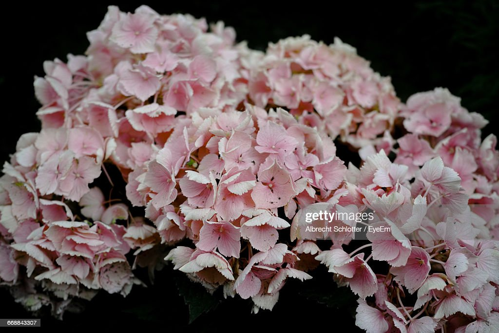 Close-Up Of Pink Flowers : Stock Photo
