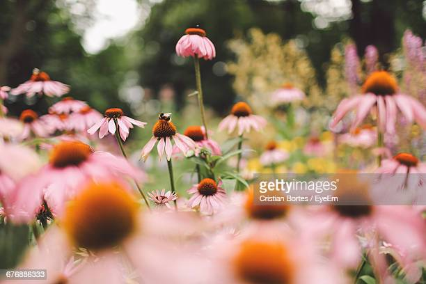 close-up of pink flowers - bortes stock pictures, royalty-free photos & images