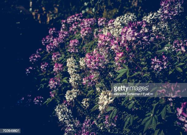 close-up of pink flowers - albrecht schlotter stock pictures, royalty-free photos & images