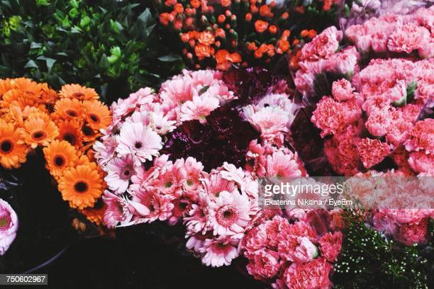 close-up of pink flowers - nikitina stock pictures, royalty-free photos & images