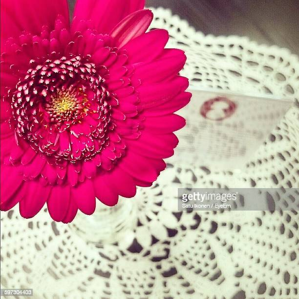 Close-Up Of Pink Gerbera Daisy Blooming Against Tablecloth