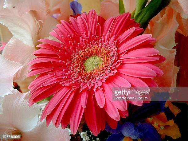 close-up of pink gerbera daisy in bouquet - gladiolus stock pictures, royalty-free photos & images