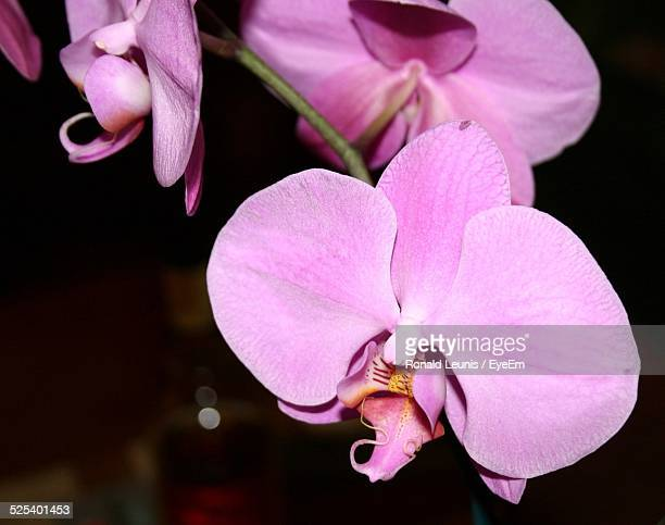 Close-Up Of Pink Orchid On Field