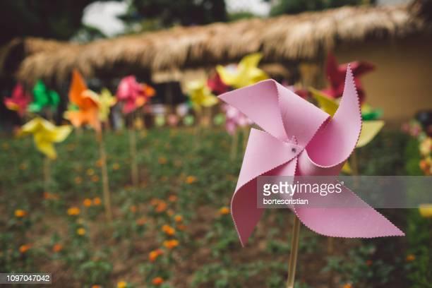 close-up of pink pinwheel toy on field - bortes stock-fotos und bilder