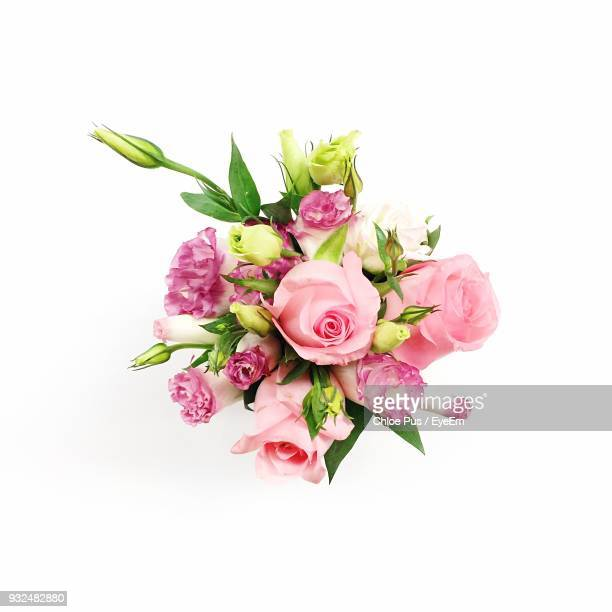 close-up of pink roses against white background - bunch stock pictures, royalty-free photos & images