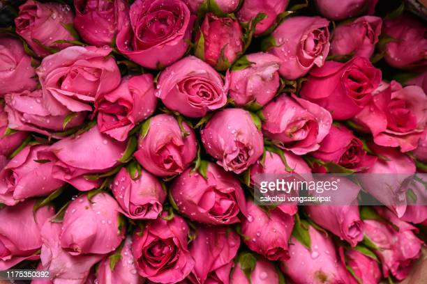 close-up of pink roses bouquet - rose colored stock pictures, royalty-free photos & images