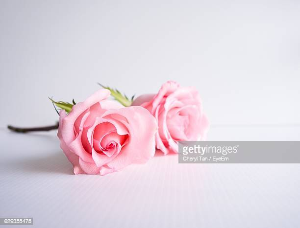 close-up of pink roses on table - バラ ストックフォトと画像