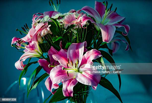close-up of pink stargazer lily - stargazer lily stock photos and pictures
