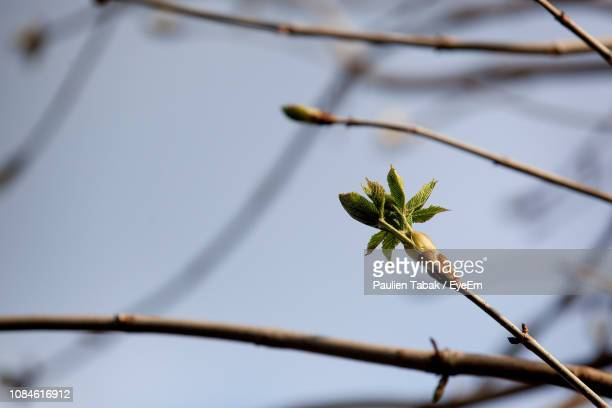 close-up of plant against blurred background - paulien tabak stock pictures, royalty-free photos & images