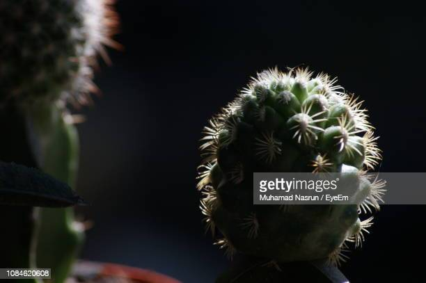 close-up of plant against blurred background - muhamad nasrun stock pictures, royalty-free photos & images