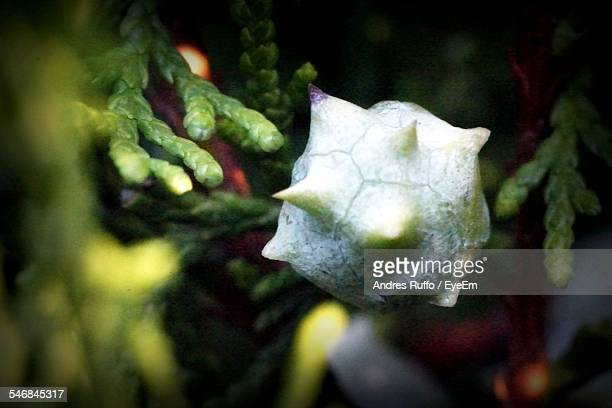 close-up of plant against blurred background - andres ruffo stock pictures, royalty-free photos & images