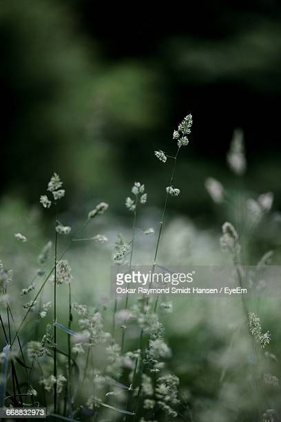 close-up of plant against blurred background - oskar stock pictures, royalty-free photos & images