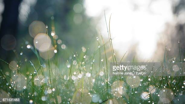 close-up of plant against blurred background - dew stock pictures, royalty-free photos & images