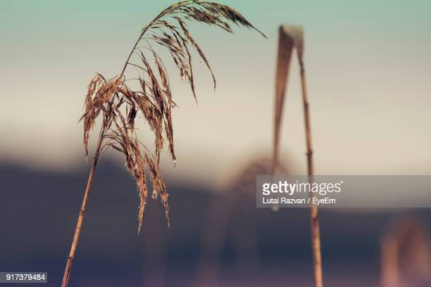 close-up of plant against blurred background - lutai razvan stock pictures, royalty-free photos & images
