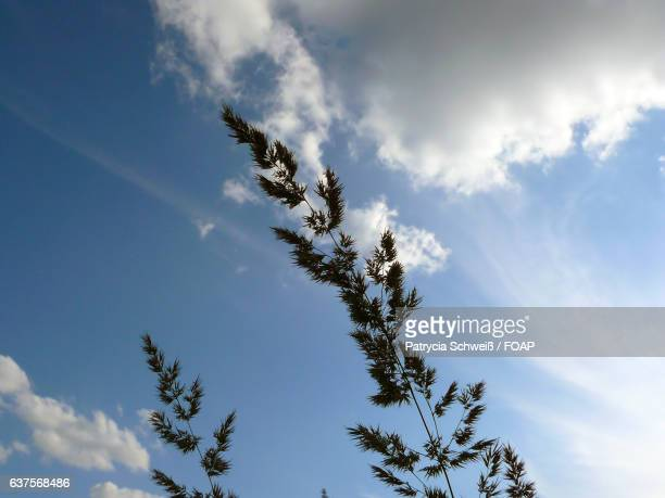 Close-up of plant against cloudy sky