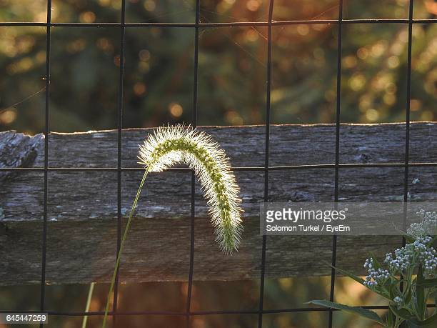 close-up of plant against metal grate - solomon turkel stock pictures, royalty-free photos & images
