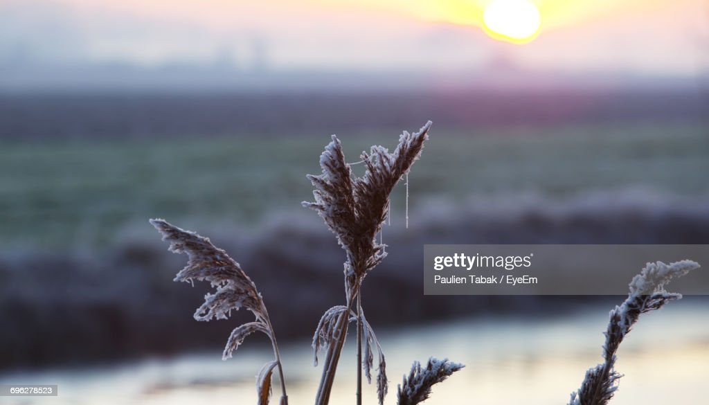 Close-Up Of Plant Against Sky During Sunset : Stockfoto