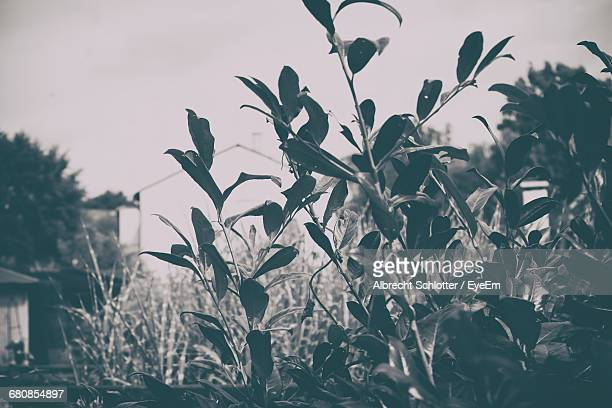 close-up of plant against sky - albrecht schlotter stock photos and pictures