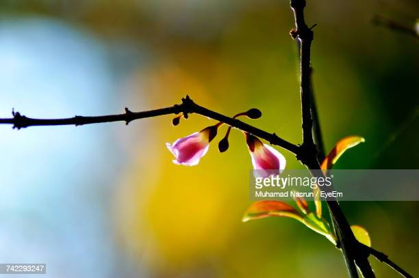 close-up of plant against sky - muhamad nasrun stock pictures, royalty-free photos & images