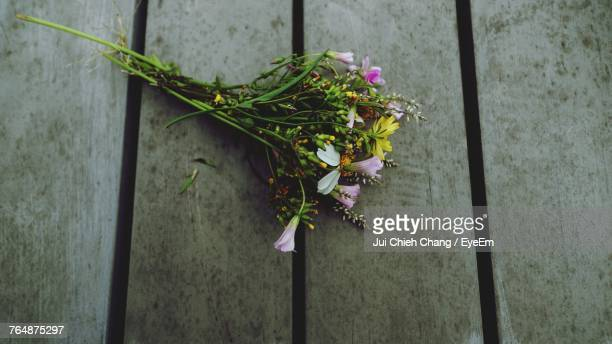 close-up of plant against wall - chang jui chieh stock photos and pictures