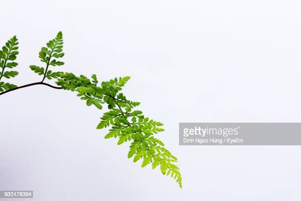 close-up of plant against white background - ramo parte della pianta foto e immagini stock