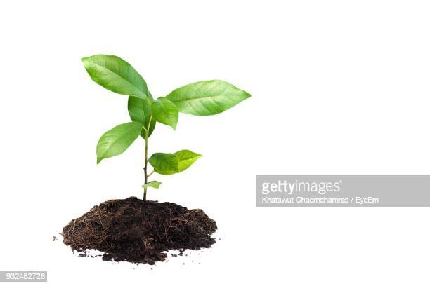 close-up of plant against white background - seedling stock pictures, royalty-free photos & images