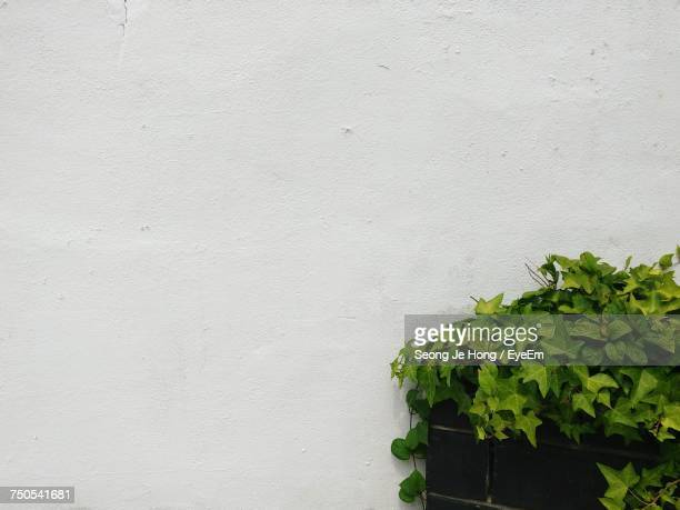 close-up of plant against white wall - whitewashed stock photos and pictures