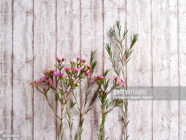 Close-Up Of Plant Against Wooden Wall