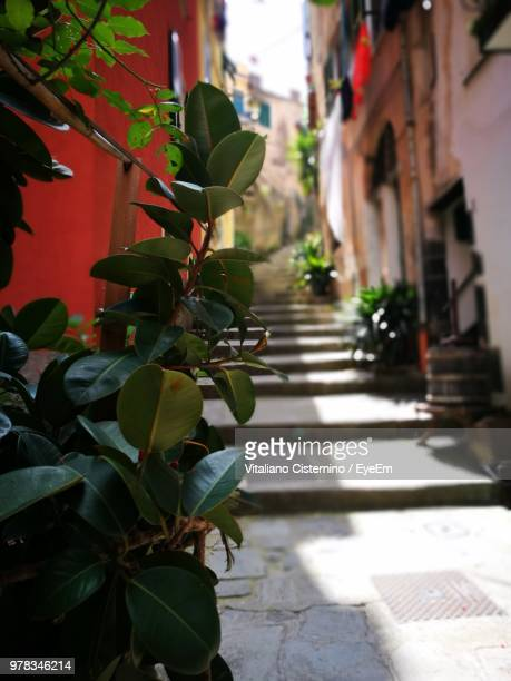 close-up of plant by footpath against buildings in city - cisternino stock photos and pictures