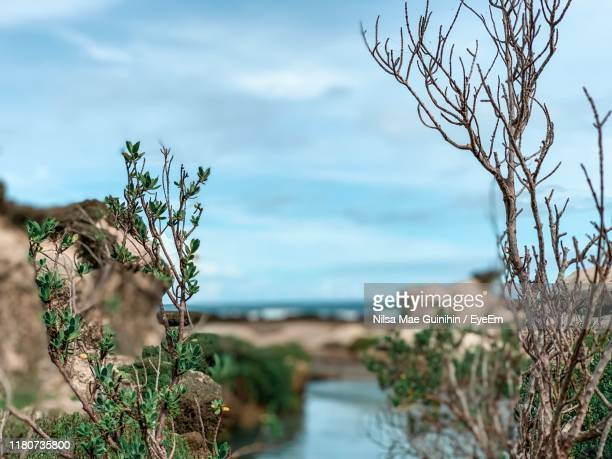 close-up of plant by sea against sky - nilsa stock pictures, royalty-free photos & images