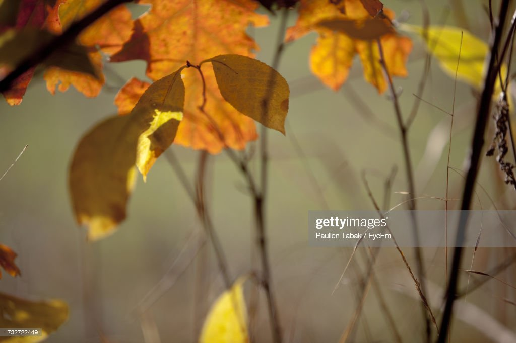 Close-Up Of Plant During Autumn : Stockfoto