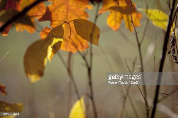 close-up of plant during autumn - paulien tabak photos et images de collection