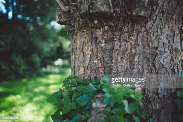 close-up of plant growing by tree trunk - bortes stockfoto's en -beelden